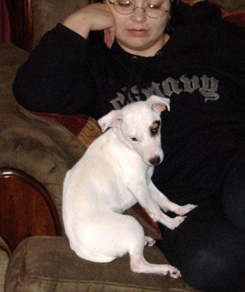 Roxy (Jack Russell Terrier)