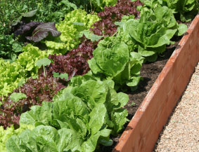 2x8's make great walls for raised beds.
