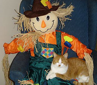 Tiger with Scarecrow - Halloween