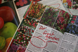 Ordering From Garden Catalogs ThriftyFun