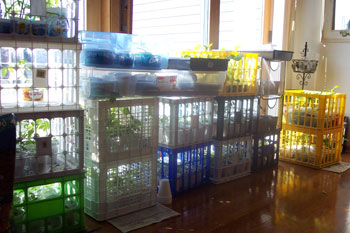 Milk Crate Garden to Start Seeds