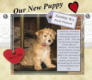 Scooter Bentley - Bichon Terrier Mix